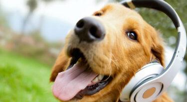 Fofinhos e rentáveis: mercado de pets dribla a crise