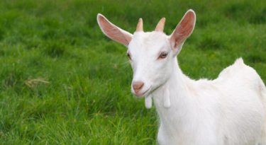 Tendências mapeadas pela TBWA incluem até yoga com cabras