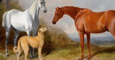 Quando o dogue alemão virou cavalo