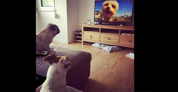 Discovery traz ao Brasil canal de TV para cachorros