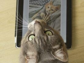 Gatos ajudam Facebook a criar algoritmos contra o bullying
