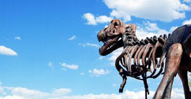 Somos todos dinossauros assustados?