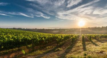 Ações digitais educativas revolucionam o agronegócio