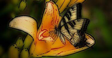 Mídia: o néctar das borboletas
