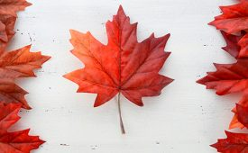 "Propaganda canadense: multicultural e sem ""bullshit"""