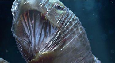 Animais marinhos sufocam com plástico em alerta da Tribal