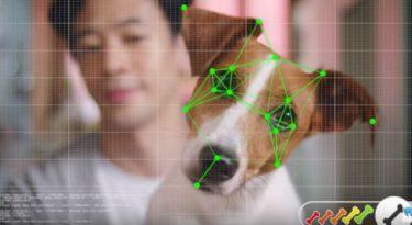 Como funciona um e-commerce para cachorros