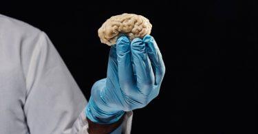 Cientistas conseguem dar vida a cérebro morto. Êita