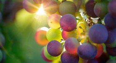 Vinhos nacionais se preparam para maior concorrência
