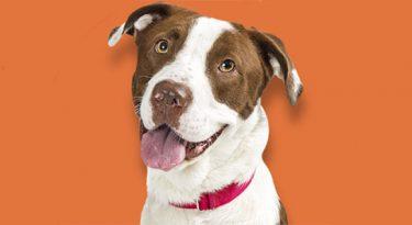 SBT abraça a causa animal em nova campanha