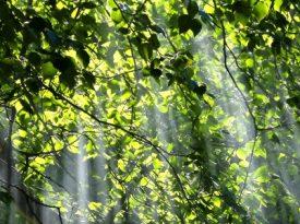 Diferenças entre discurso e práticas na sustentabilidade