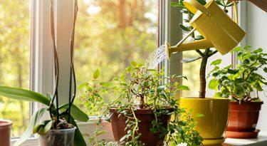 Verdejando promove o cultivo das plantas em casa