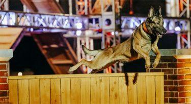 History e Seresto promovem desafio de cães em websérie