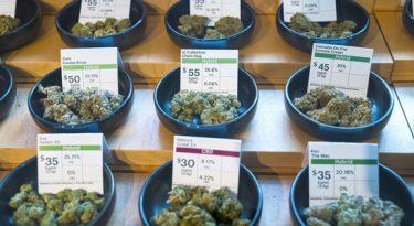 As eleições nos EUA e o marketing de cannabis