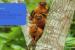 Grupo Boticário reforça compromissos socioambientais
