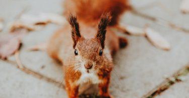 Aprendendo a fazer marketing com os esquilos