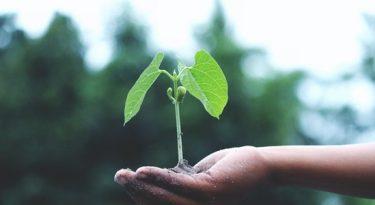 Grupo Boticário quer acelerar iniciativas socioambientais