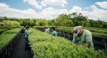 Por que a Nescafé decidiu plantar 3 milhões de árvores